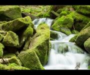 Wasserfall im Moss
