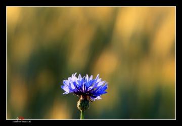 Blumen/Blüten