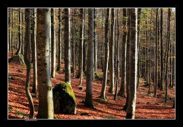 Natur/Landschaft
