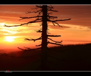 Sonnenaufgang III