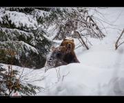 Bären I