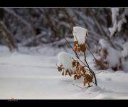 Schneesoldat II