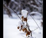 Schneesoldat