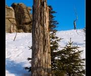 Toterbaum im Schnee